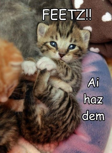 Cats,cute,feet,kitten,squee