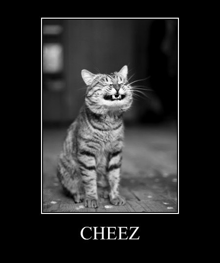 Can I Has Cheezburger Now?
