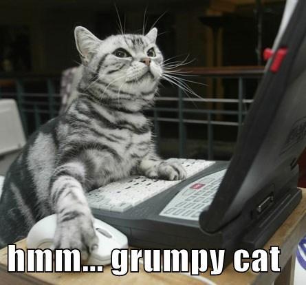 hmm... grumpy cat
