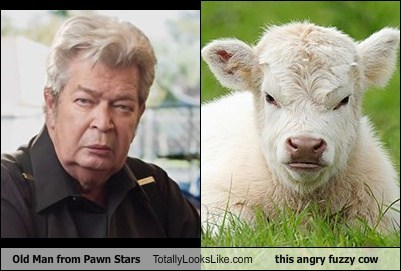 Old Man From Pawn Stars Totally Looks Like This Angry Fuzzy Cow