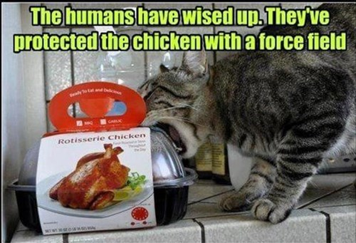 Cats,chicken,technology,force felid