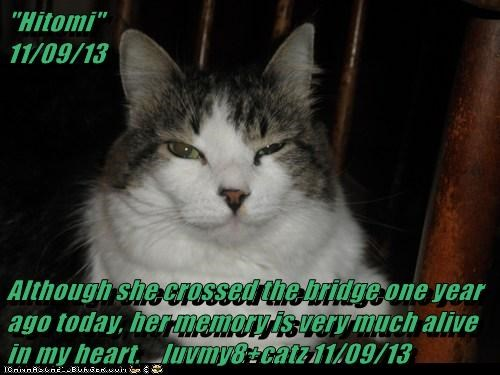 """Hitomi""                                                          11/09/13  Although she crossed the bridge one year ago today, her memory is very much alive in my heart.    luvmy8+catz 11/09/13"