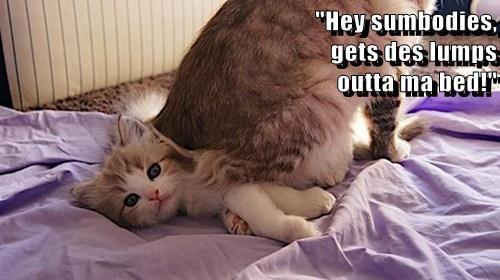 kitten,bed,lumps,cute