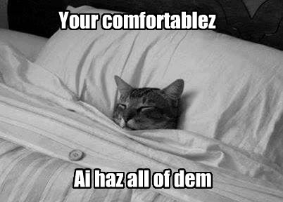 Can I Has Comfortablez?