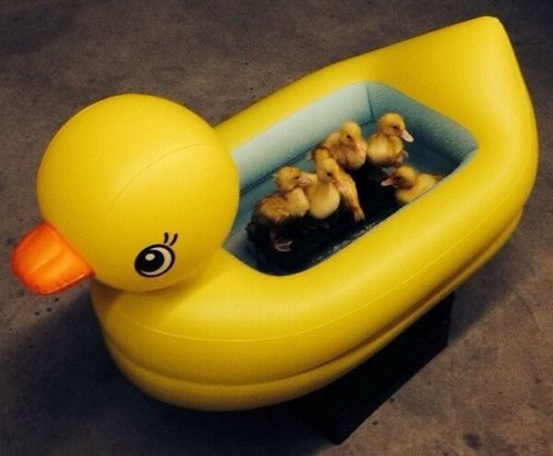 What do Duckies Take a Bath in?  One Giant Rubber Ducky, of Course