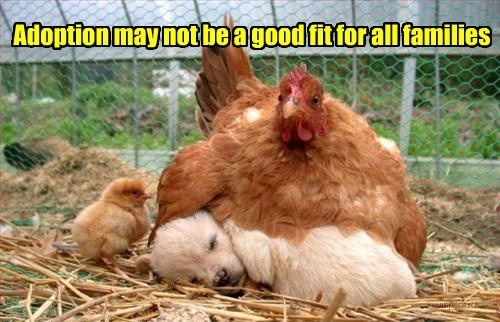 cute,adoption,hens,puppies