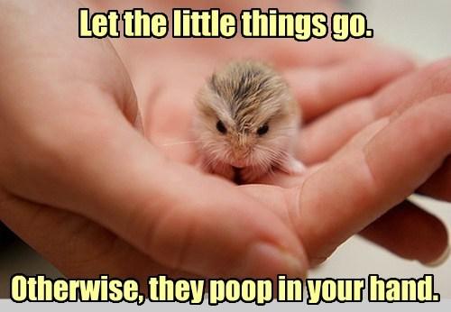 advice,deep,tiny,shrew