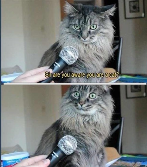 Cats,interview,disbelief