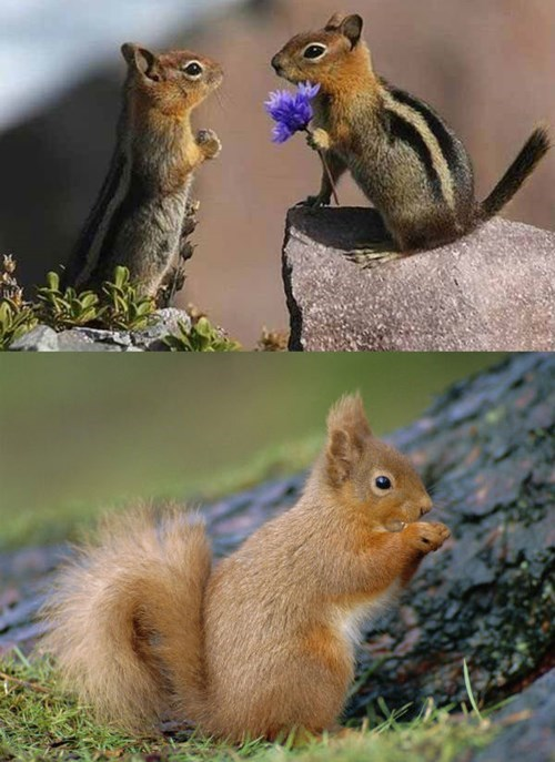 Squee Spree: Chipmunk vs. Squirrel