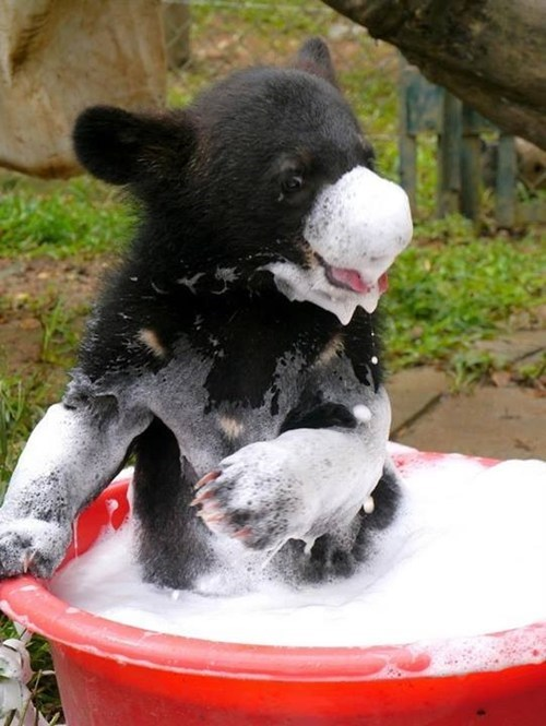 Bear Cub Takes a Bubble Bath