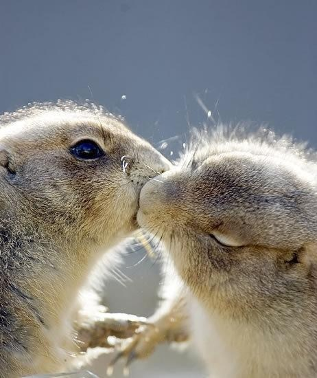 cute,gophers,KISS