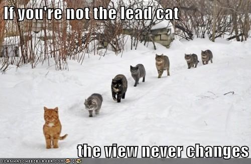 If you're not the lead cat  the view never changes