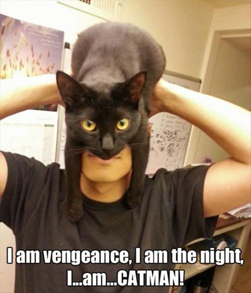 Cats,batman,cat woman,mask