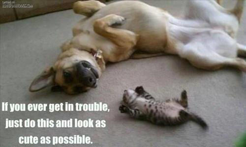 Cats,cute,dogs,innocent,kitten,trick