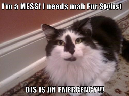 I'm a MESS! I needs mah Fur Stylist  DIS IS AN EMERGENCY!!!