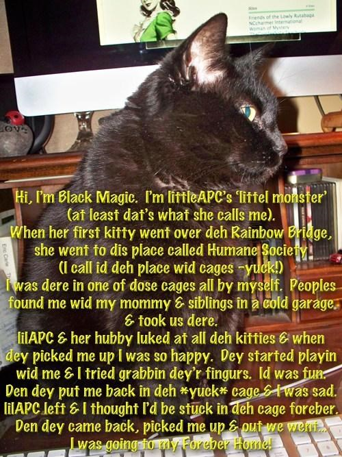 """I laugh in the face of bad luck - I got my black cat on Friday the 13th.   I think the lady at the Humane Society was afraid I'd change my mind.... she quickly said """"the 2 bad lucks cancel each other out. Yu'll have good luck with her."""" LOL"""