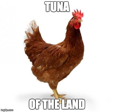 land,chicken,parody,touché