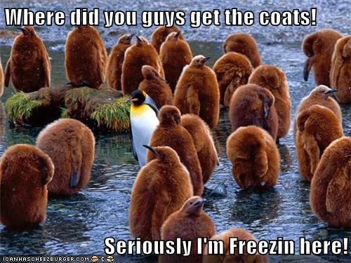 Where did you guys get the coats!  Seriously I'm Freezin here!