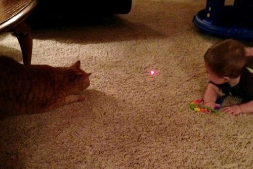 Babies,Cats,laser pointers,parenting,g rated