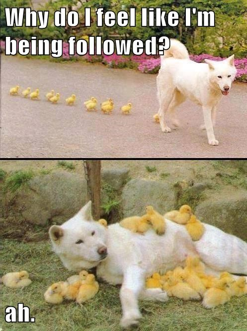 Being Followed Isn't Always a Bad Thing