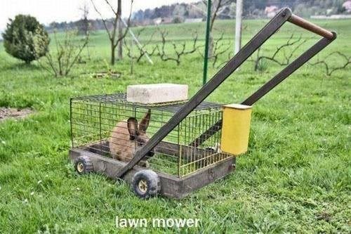 bunny,lawn mower,funny,rabbit,slow