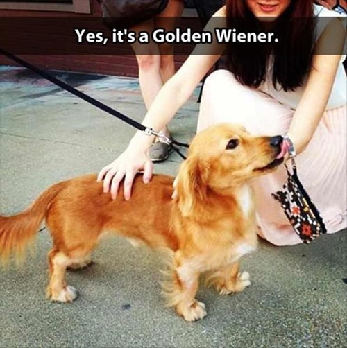 That is One Glorious Wiener Dog
