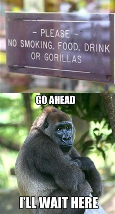 patience,gorillas,signs