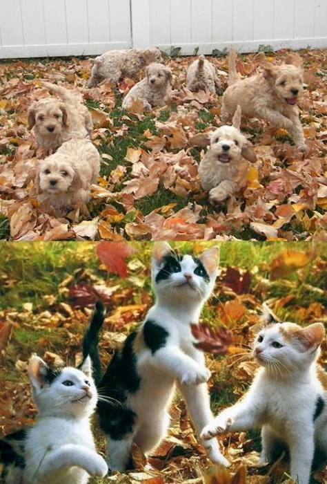 Squee Spree: Puppies in Leaves vs. Kittens in Leaves