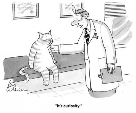 Sorry Kitty