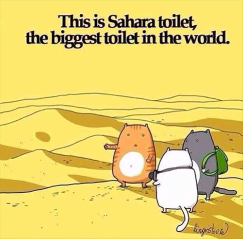 Cats,comics,funny,toilet,sahara