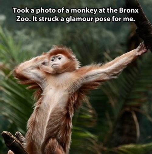 Photo,pose,monkeys,glamour,zoo