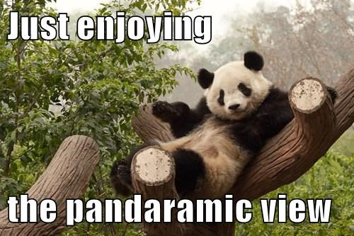 Just enjoying  the pandaramic view