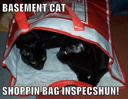BASEMENT CAT  SHOPPIN BAG INSPECSHUN!
