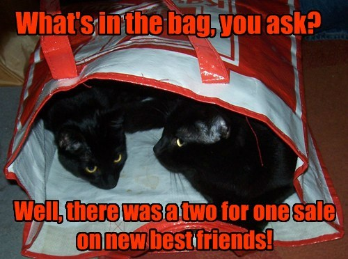 What's in the bag, you ask?