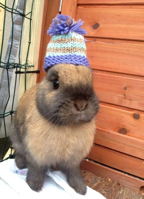 My Bunny Beanie Warms my Ears