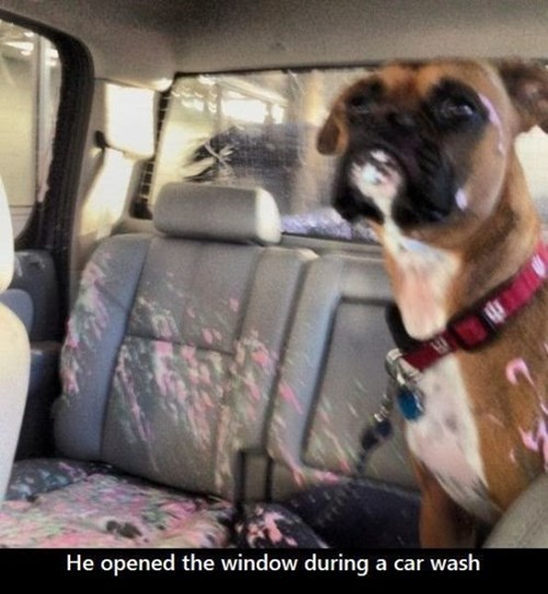 cars,car wash,dogs,guilty,window