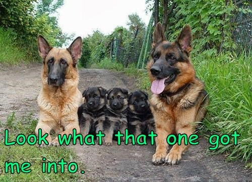 dogs,kids,puppies,marriage,parenthood,spouse