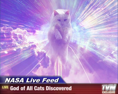 NASA Live Feed - God of All Cats Discovered