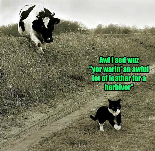 leather,Cats,funny,cows