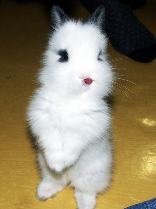 Baby Bunny Gives You a Raspberry