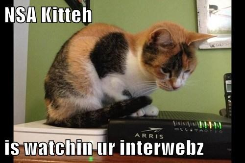 NSA Kitteh  is watchin ur interwebz