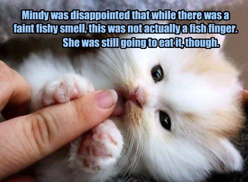 Mindy was disappointed that while there was a faint fishy smell, this was not actually a fish finger.