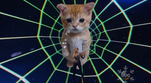 Look at This Cat of the the Day: Miley's AMA Backup was a Sobbing Kitten