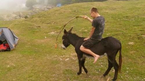 donkey,motivation,funny