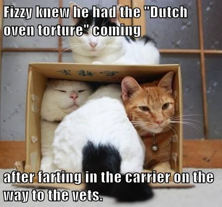 "Fizzy knew he had the ""Dutch oven torture"" coming   after farting in the carrier on the way to the vets."