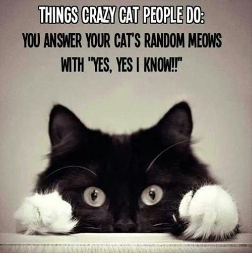 Cats,crazy cat lady,answer,cute