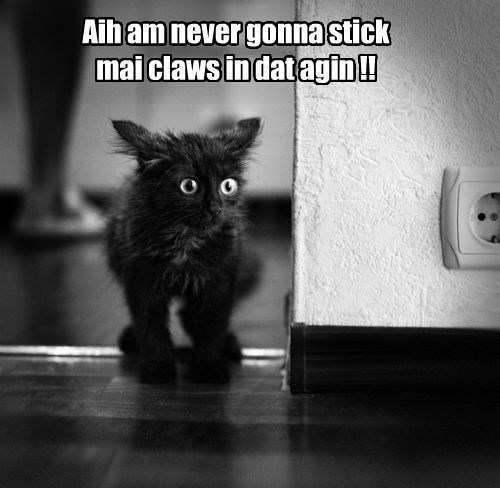 Aih am never gonna stick mai claws in dat agin !!