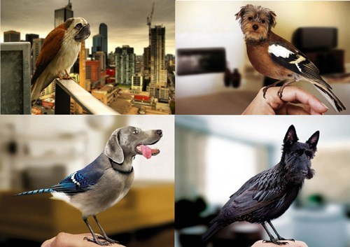 Photorealism of the Day: Dirds - Dogs Shaped Like Birds