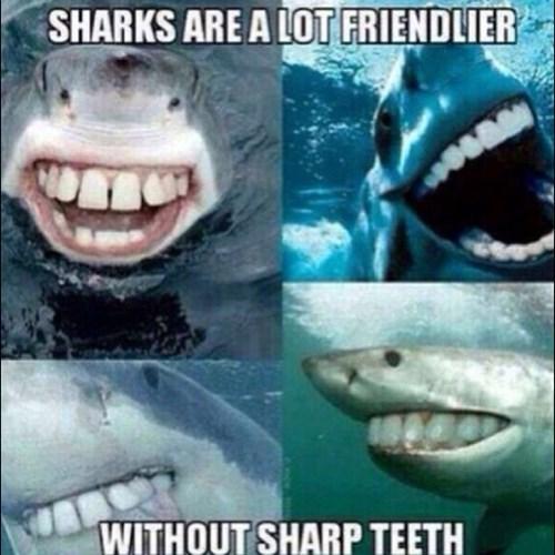 funny,sharks,smile,teet