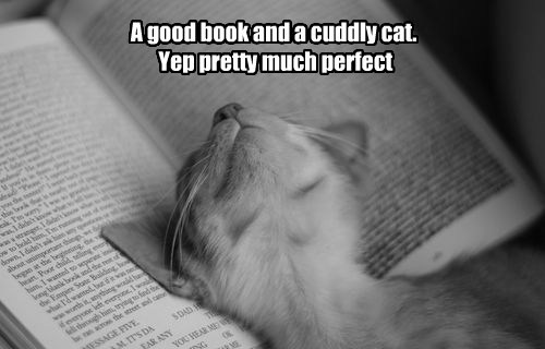 A good book and a cuddly cat.  Yep pretty much perfect